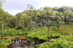 Sumpfgebiet Norwegen Lizenzfreie Stockfotos