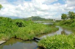 Sumpfgebiet-Park Stockbild