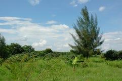 Sumpfgebiet-Park Lizenzfreies Stockbild