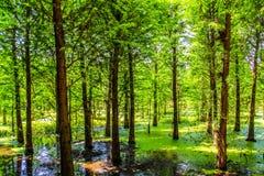 Sumpfgebiet-Park Chinas Yunnan Kunming Laoyuhe lizenzfreie stockbilder