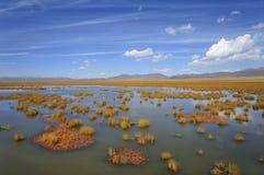 Sumpfgebiet in Ruoergai-automn stockbild