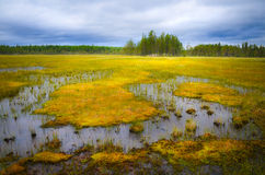 Sumpfgebiet in Schweden Stockbilder