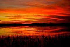 Sumpfgebiet-Sonnenuntergang Stockfotos