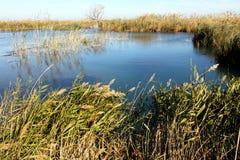 Sumpfgebiet Ullal de Baldovi Valencia-Provinz Spanien lizenzfreie stockfotos