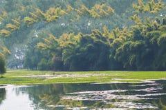 Sumpfgebiet und Bambusbäume stockbilder
