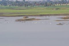 Sumpfgebiet und Vögel lizenzfreie stockbilder