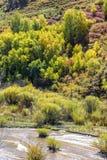 Sumpfgebiet und weiße Birke im Herbst lizenzfreies stockbild