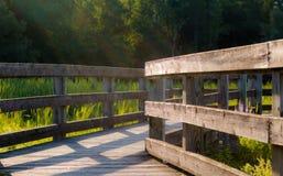 Sumpfgebiet-Weg-Weg Stockfoto