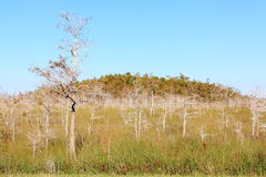Sumpfgebiet-Winterlandschaft Stockbilder
