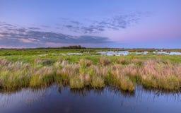 Sumpfgebiet Zuidlaardermeer lizenzfreies stockbild