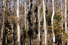 Sumpfgebietbäume Lizenzfreies Stockfoto