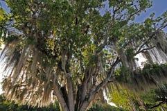 Sumpfgebietbaum Lizenzfreie Stockfotografie