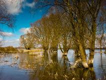 Sumpfgebiete lizenzfreie stockbilder