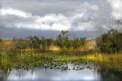 Sumpfgebiete Lizenzfreies Stockfoto