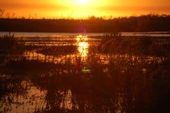 Sumpfgebiete Argentinien Lizenzfreies Stockbild