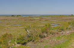 Sumpfgebiete auf einer Düneninsel Stockbild