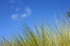 Sumpfgebiete bedecken gegen blauen Himmel mit Gras lizenzfreie stockbilder
