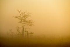 Sumpfgebiete bei Sonnenaufgang Lizenzfreie Stockfotos