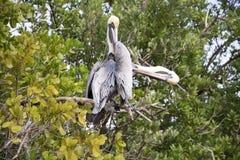 Sumpfgebiete, Florida, USA Lizenzfreies Stockfoto