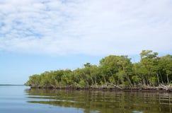 Sumpfgebiete, Florida, USA Lizenzfreie Stockbilder