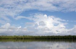 Sumpfgebiete, Florida, USA Stockfotografie