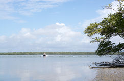 Sumpfgebiete, Florida, USA Lizenzfreies Stockbild