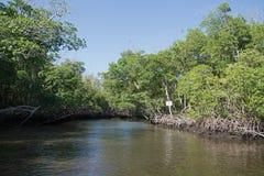 Sumpfgebiete, Florida, USA Stockbild