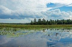 Sumpfgebiete mit Kumulus-Wolken im Abstand lizenzfreie stockfotografie
