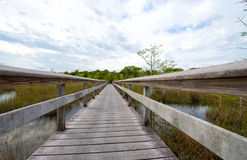 Sumpfgebiete Nationalpark, Florida Lizenzfreies Stockbild