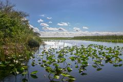 Sumpfgebiete in Süd-Florida Stockbilder
