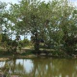 Sumpfgebiete schwammen Länder in den Sumpfgebieten Florida Stockfotos
