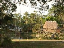 Sumpfgebiete schwammen Länder in den Sumpfgebieten Florida Stockfoto