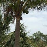 Sumpfgebiete schwammen Länder in den Sumpfgebieten Florida Lizenzfreie Stockfotos