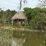 Sumpfgebiete schwammen Länder in den Sumpfgebieten Florida Lizenzfreies Stockfoto