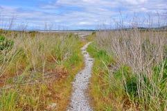 Sumpfgebiete und Spuren bei Miranda Shorebird Centre lizenzfreies stockfoto