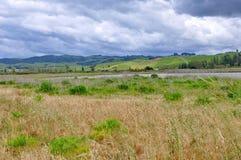 Sumpfgebiete und Spuren bei Miranda Shorebird Centre stockbild