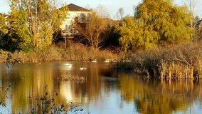 Sumpfgebiete während des Herbstes Lizenzfreies Stockbild
