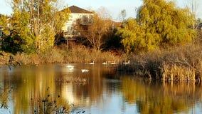 Sumpfgebiete während des Herbstes Lizenzfreie Stockbilder