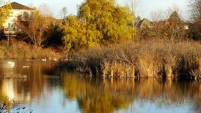 Sumpfgebiete während des Herbstes Stockfotos
