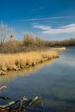 Sumpfgebietlandschaft Stockbilder