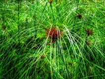 Sumpfgras - Singapur - Gärten durch die Bucht Stockfotografie