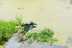 Sumpfige Oberfläche eines Reservoirs Stockbild