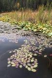 Sumpfige Uferzone Lizenzfreie Stockfotografie