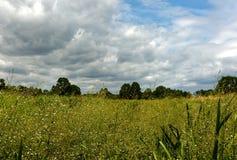 Sumpfige Wiese im Sommer unter blauem Himmel mit Wolken Stockfotografie