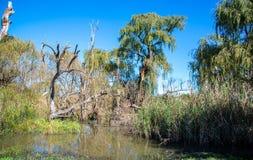 Sumpfiger Bereich in einem Fluss, Südafrika stockbild