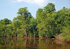 Sumpfiger Flussarm in Louisiana stockfoto