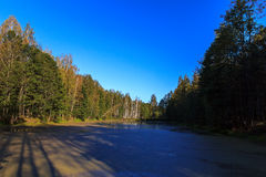 Sumpfiger See im Wald Stockbild