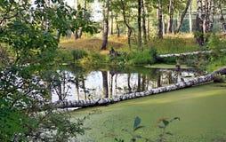 Sumpfiger Teich im Holz Lizenzfreie Stockbilder