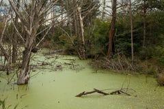 Sumpfiger Teich im immer währenden belarussischen Holz Lizenzfreie Stockfotografie