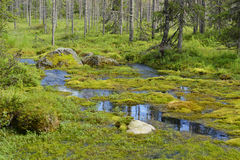 Sumpfiger Waldfluß Stockbilder